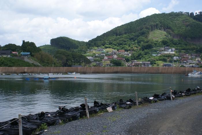 seawall shibitachi 02